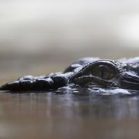 11-year-old boy eaten by crocodile in Papua New Guinea