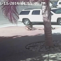 Hero cat saves four-year-old from savage dog