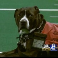 Loyal service dog walks in deceased owner's place during graduation ceremony