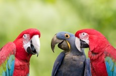 It looks like three parrots that were stolen have been recovered