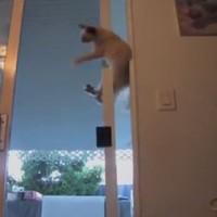 The sliding door is no match for this dexterous cat