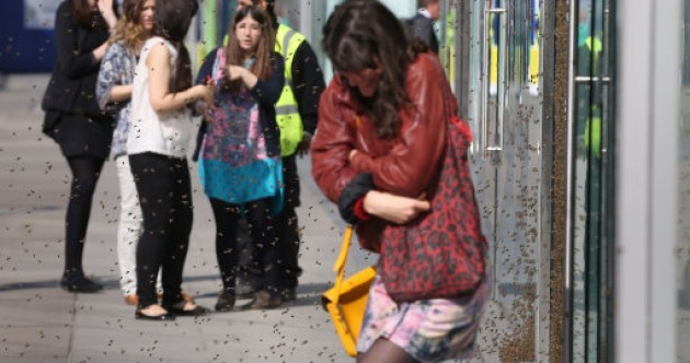 High-street shoppers attacked by massive swarm of bees in London
