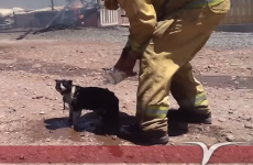 Heartbreaking video of fireman helping burned cat with water