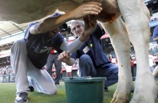 Could cow-milking contests be the future of pre-game entertainment?