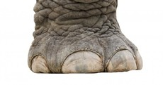 'Biggest dinosaur ever' would have weighed the same as 14 African elephants