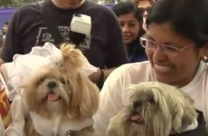 Dozens of dogs get hitched in mass canine wedding