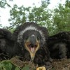 The first white-tailed eagle chicks of the year have been born
