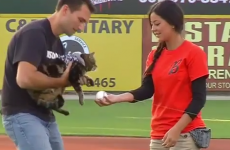 Cat who saved child from dog 'throws' first pitch at baseball game