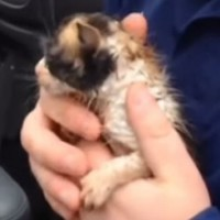 Weatherman saves tiny shivering kitten from tornado rubble