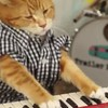 A new cat is carrying on the legacy of Keyboard Cat