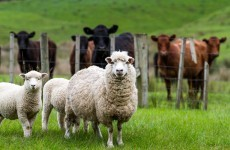 Sheep and cattle farmers say they are struggling and want newly-elected MEPs to help