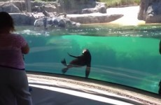 This sea lion is extremely worried about a little girl falling over
