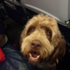 A plane had to make an emergency landing because a dog wouldn't stop pooping