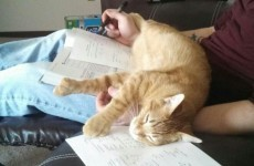 10 pets who just wanted to help you study
