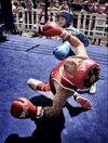 Your sports picture of the weekend as young boxing star Layla Roche goes KO crazy