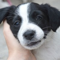 A puppy adoption day is on in Galway this weekend