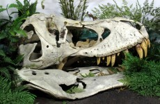 Man sentenced to jail for smuggling dinosaur fossils