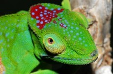 Gallery: 615 new species discovered in Madagascar since 1999