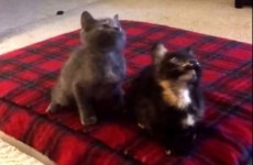 These kittens are suspiciously good at dancing