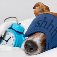 Turns out a good night's sleep after learning something new WILL improve memory