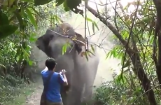 Tourist with nerves of steel stops charging elephant in its tracks