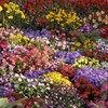'Plane crash' that caused emergency alert turns out to be... a flowerbed
