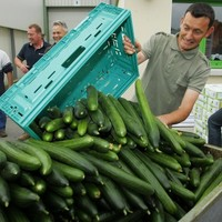 E. coli outbreak: was it the cucumbers after all?