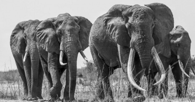 Kenya's largest elephant has been killed by poachers