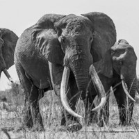 Kenya's largest elephant has been killed by poachers