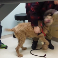 Dog who went blind reacts to seeing family for first time after eye surgery