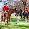 Anti-cruelty group calls for 'appalling' fox hunt blessings to end