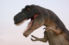 So it turns out that dinosaurs were neither warm nor cold blooded