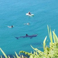 Lunchtime bathers in Cork today got a visit from massive basking shark