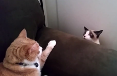 When two cats meet for the first time...