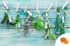 Opinion: Summer thyme and the remedy's easy...