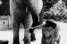 Reeling in the Years: Dublin Zoo celebrates 180 years