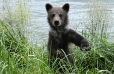 Zoo kills neglected bear cub and stuffs it to teach 'cruelty of nature'