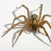 Woman sets her house on fire while trying to kill a spider
