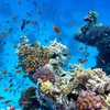 Caribbean coral reefs could vanish within 20 years because of humans