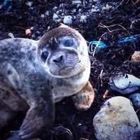 Galway gardaí saved a stranded seal last night
