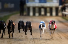 Hiring out greyhound stadia as film sets could help the industry's money woes