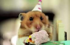 This teeny-tiny birthday party for a teeny-tiny hedgehog is just the cutest