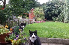 """""""People are devastated"""": Fears that cats are being deliberately poisoned on Dublin road"""