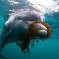 """""""Don't swim with this dolphin"""" islanders warned, as 'Dusty' changes location"""