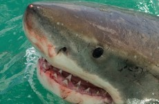 Here's why you shouldn't be worried about shark attacks