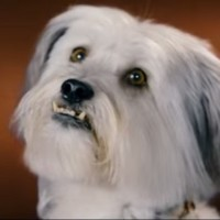 VIDEO: Your weekend movies... Pudsey the Dog