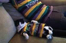 A man and his cat, just chilling in their matching American hurling jerseys