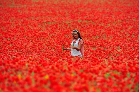 Elizabeth Glazie walks through a poppy field in Northumberland. The flowers have bloomed early due to warm weather.