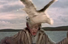 """A senator thinks seagulls are """"losing the run of themselves""""... Well. Are they?"""