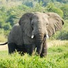 Junk in that trunk: The weight problem facing elephants